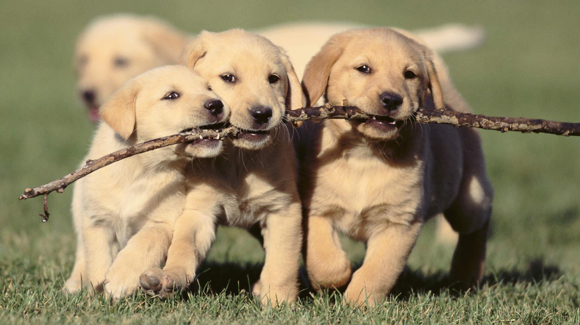 playful 강아지