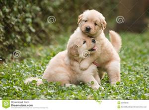 playful Anak Anjing