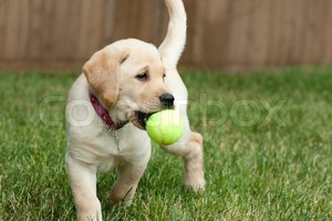 playing fetch