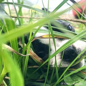 playing peek-a-boo