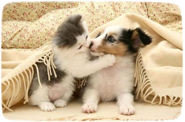 Kittens Images Playing Together Wallpaper And Background Photos