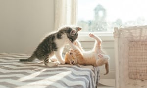playing together