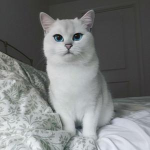 pretty बिल्ली