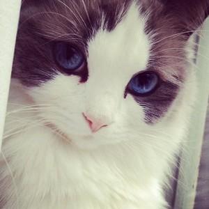 pretty 고양이