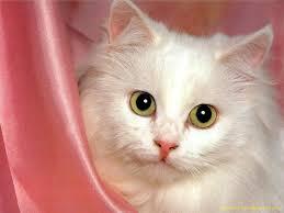pretty Gatti