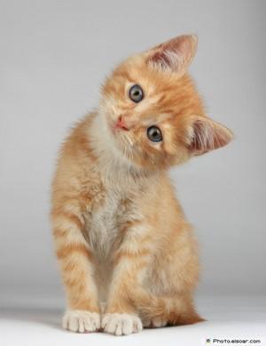 pretty gatos