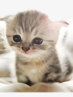pretty kucing