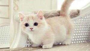 pretty 猫