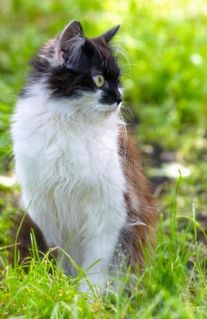 pretty Katzen
