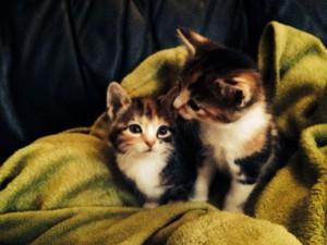 pretty felines