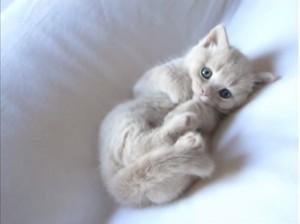 pretty kitten