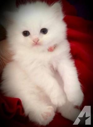pretty kittens