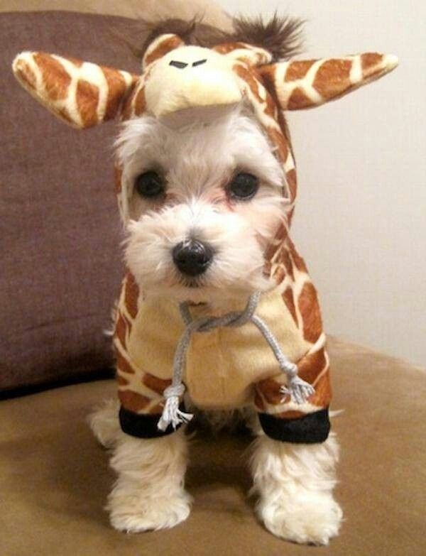 Puppies In Costume   Cute Puppies Photo (41561884)   Fanpop