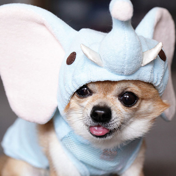 Cute Puppies Images Puppies In Costume Wallpaper And Background