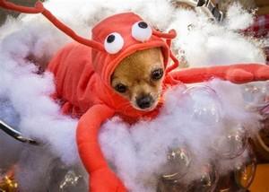 子犬 in costume