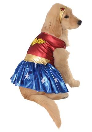chó con in costume