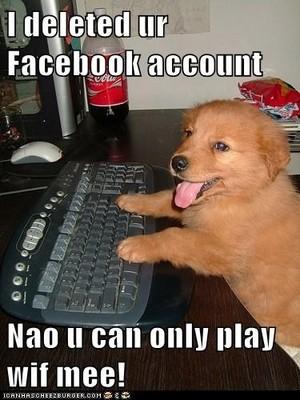 chó con online