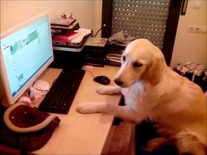 子犬 online