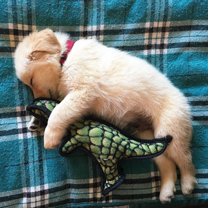 puppies sleeping with stuffed animals