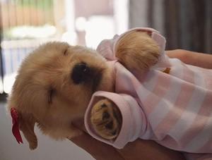 Anak Anjing taking a nap