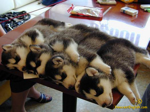 chiots taking a nap