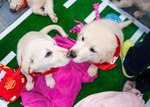 eskimo puppy kisses