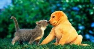 puppy friendship