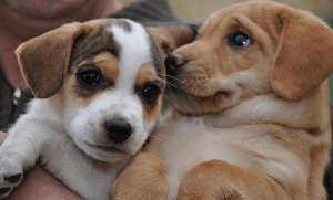 cún yêu, con chó con friendship