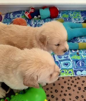 子犬 friendship