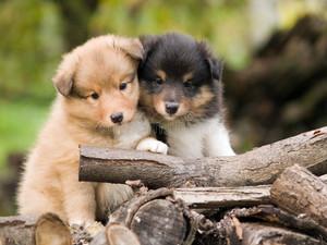 강아지 friendship