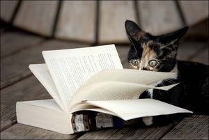 leitura time