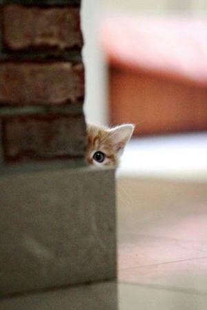 shy kittens