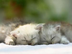 sleepytime