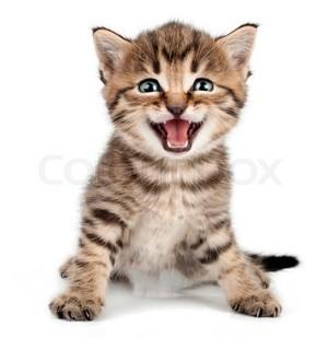 smiling Котята