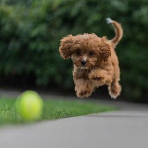 so cute dog puppie💖