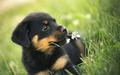 so sweet dog puppie🌹♥