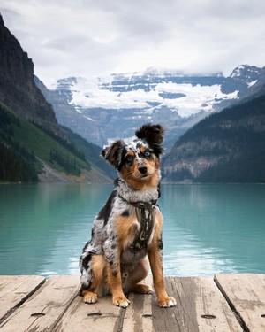so sweet dog puppy🌹♥