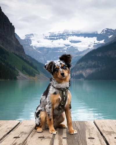 jlhfan624 fondo de pantalla entitled so sweet dog puppy🌹♥