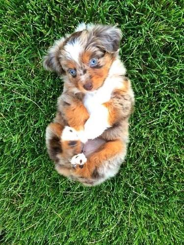 jlhfan624 achtergrond entitled so sweet dog puppy🌹♥