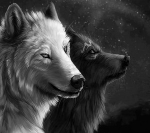 spirit 狼