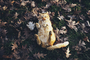 sweet autumn cat🌹