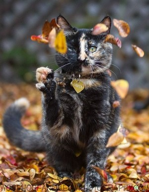 sweet autumn cat🌹♥