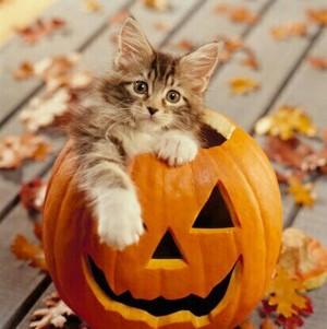 sweet autumn kitten🌹
