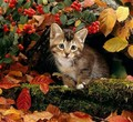 sweet autumn kitten🌹 - animals photo
