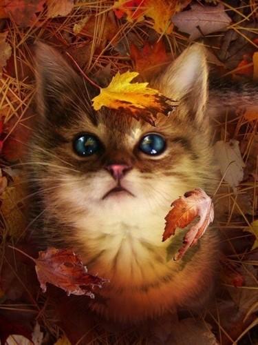 greyswan618 wallpaper called sweet autumn kitten🌹♥