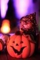 sweet Halloween pumkin cat😺🎃