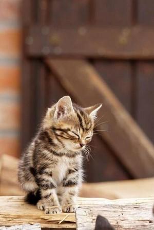 sweet kitten♥