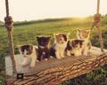 sweet kittens🌹♥ - animals photo