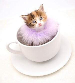 茶碗, 茶杯 小猫