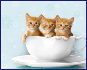 tazza di tè, tazza da tè kitties